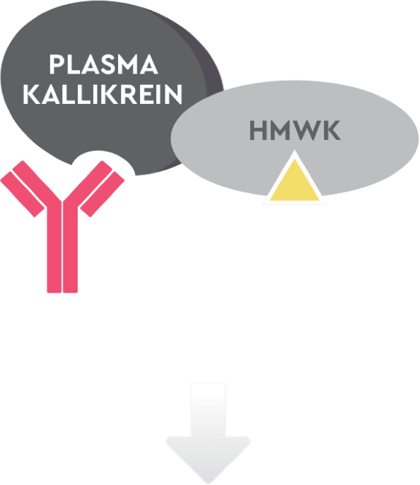 How plasma kallikrein, HMWK, bradykinin, and TAKHZYRO® (lanadelumab-flyo) work in a patient treated with TAKHZYRO